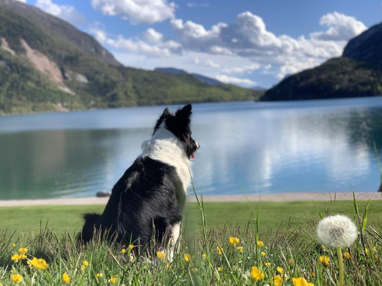 parchi-acquatici-in-trentino-acquapark-molveno,5197.jpg?WebbinsCacheCounter=1